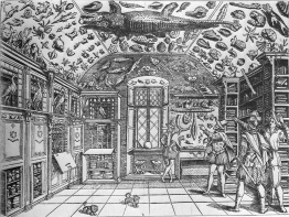 Cabinet of Curiousity
